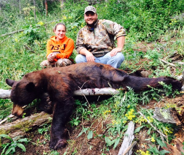 black bear hunting in New Mexico