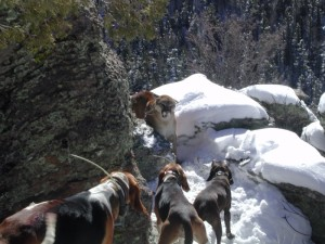 Retriever Dogs & Cougar on Snowy Mountain