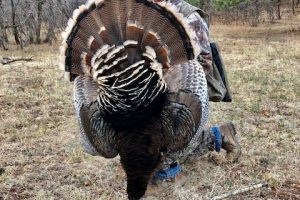 How to Choose a Turkey Call